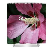 Pink Hibiscus Cose -up Shower Curtain