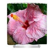 Pink Hibiscus Flower 1 Shower Curtain