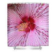 Pink Hibiscus Macro Shower Curtain