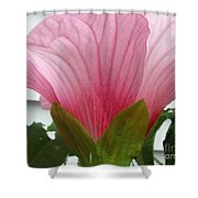 Pink Hibiscus Ready To Bloom Shower Curtain