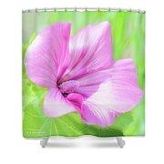 Pink Hollyhock Flower Shower Curtain