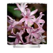 Pink Hyacinth Shower Curtain