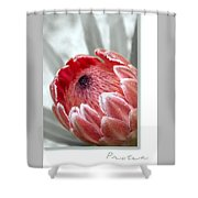 Pink Ice Protea Shower Curtain