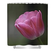 Pink Impression Squared 1 Shower Curtain