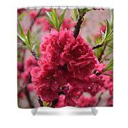 Pink In Bloom Shower Curtain