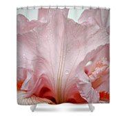 Pink Iris Study 12 Shower Curtain