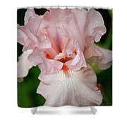 Pink Iris Study 15 Shower Curtain