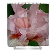 Pink Iris Study 2 Shower Curtain
