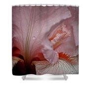 Pink Iris Study 5 Shower Curtain
