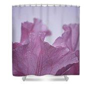 Pink Iris Study 8 Shower Curtain