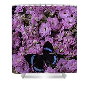 Pink Kalanchoe And Black Butterfly Shower Curtain