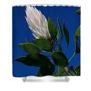 Pink King Protea Kula Maui Hawaii Shower Curtain
