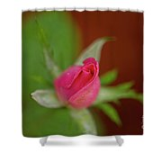 Pink Knockout Rose Shower Curtain