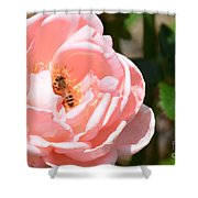 Pink Lady - Rose Shower Curtain