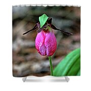 Pink Lady Slipper #2 Shower Curtain