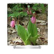 Pink Ladys Slipper Group Shower Curtain