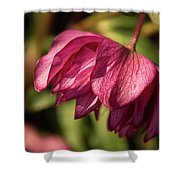 Pink Lampshade Shower Curtain