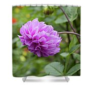 Pink Lavender Dahlia Shower Curtain