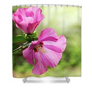 Pink Light Rose Of Sharon 2016 Shower Curtain