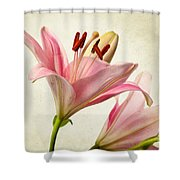 Pink Lilies Shower Curtain