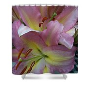 Pink Lillies Shower Curtain
