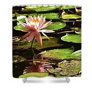 Pink Lily 14 Shower Curtain
