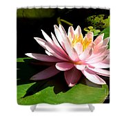 Pink Lily 9 Shower Curtain