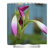 Pink Lily Bud Shower Curtain