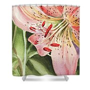Pink Lily Close Up Shower Curtain