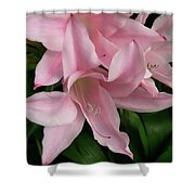 Pink Lily Flowers Shower Curtain