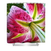 Pink Lily Summer Botanical Garden Art Prints Baslee Troutman Shower Curtain