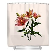 Pink Lily Trio Shower Curtain