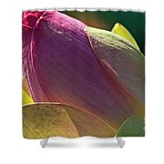 Pink Lotus Bud Shower Curtain