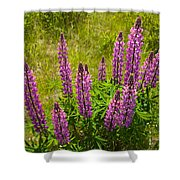 Pink Lupins Shower Curtain
