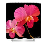 Pink Lux Shower Curtain