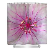 Pink No. 3  Shower Curtain