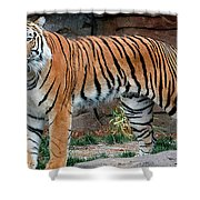 Pink Nosed Tiger Shower Curtain
