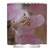 Pink Of Spring Shower Curtain