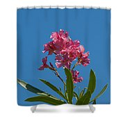 Pink Oleander Flower In Spring Shower Curtain