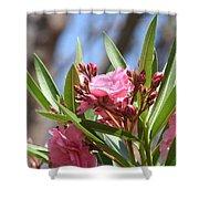 Pink Oleander IIi Shower Curtain