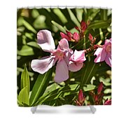 Pink Oleander Iv Shower Curtain