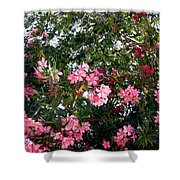 Pink Oleanders Shower Curtain