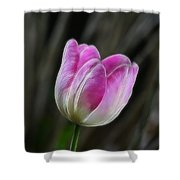 Pink On Display Shower Curtain