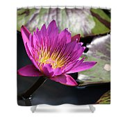 Pink On Water Shower Curtain