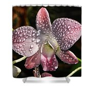 Pink Orchid And Dewdrops 013 Shower Curtain