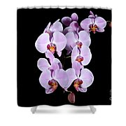 Pink Orchid Iv Shower Curtain