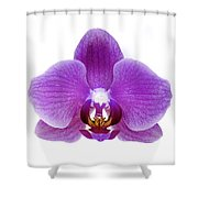 Pink Orchid On White Shower Curtain