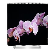 Pink Orchid Viii Shower Curtain