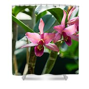 Pink Orchids - Exotic Tropical Glow Shower Curtain