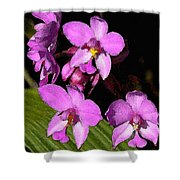 Pink Painted Orchids Shower Curtain